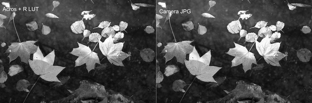 Fuji Film Simulation Comparison #3 - Acros + R.jpg