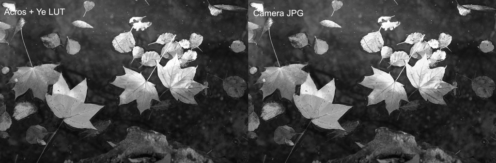 Fuji Film Simulation Comparison #3 - Acros + Ye.jpg