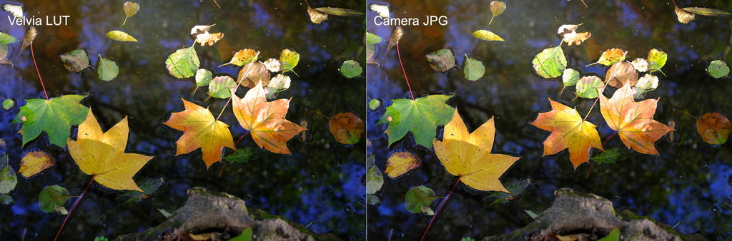 Fuji Film Simulation Comparison #3 - Velvia.jpg